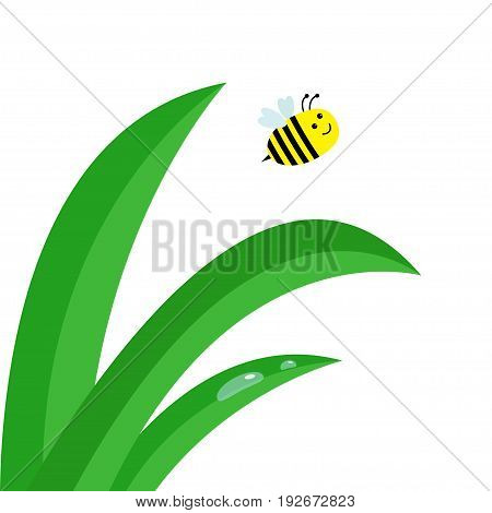 Fresh green grass stalk close up. Water drop set. Flying bee insect. Morning drop set. Cute cartoon baby character. Garden natute decoration element. Flat design. White background. Isolated. Vector
