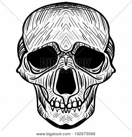 vector illustration black and white skull tattoo