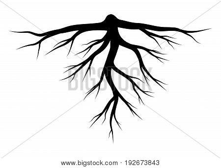 Root Silhouette Vector Symbol Icon Design.