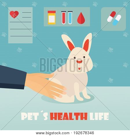 Veterinary medicine hospital, clinic for animals. Doctor with cute rabbit. Health care or treatment for wild or domestic animals.