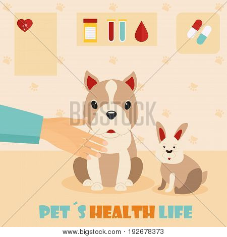 Veterinary medicine hospital, clinic for animals. Doctor with cute dog and rabbit. Health care or treatment for wild or domestic animals.