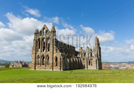 Whitby Abbey Yorkshire uk ruins in summer on hillside over tourist town and holiday destination