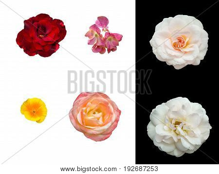 Summer flowers with flower beds separated on white or black background
