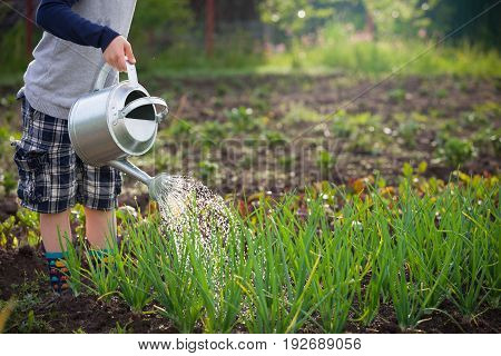 Cute little boy watering plants with watering can in the garden. Adorable little child helping parents to grow vegetables and having fun. Activities with children outdoors.