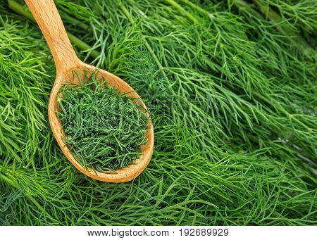 Dill weed. Fresh dill greens. Fennel  in wooden spoon. Green background