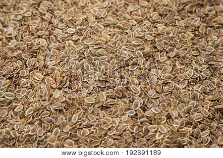 Background of dried dill seeds. Dill weed.