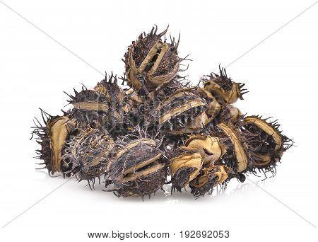 pile of dried Castor Castor bean Castor oil plant isolated on white background