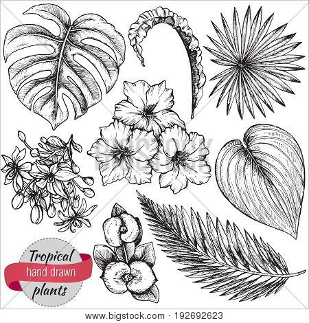 Vector collection of hand drawn tropical flowers, palm leaves, jungle plants. Black and white exotic floral illustration. Isolated objects