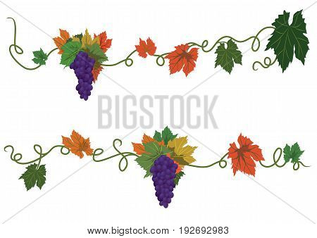 set of vector autumnal dividers with grapes