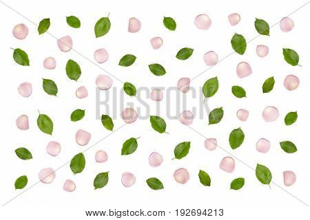 Rose petals, levas pattern on white background, top view. Pink rose petals. Fresh green leaves flat lay background. Romantic anniversary celebration card, backdrop. Flower petals on white.