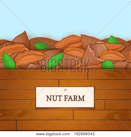 Wooden box with pecan nuts. Vector illustration. Boards wood background, border with walnut fruit and label. For the design of packaging, food breakfast, detox diet, vegan, cosmetics oil
