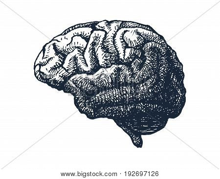 Human brain on white background. Hand drawn vector illustration