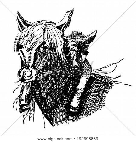 Drawing of a wild horse with a foal on the neck ,sketch ink hand-drawn vector illustration