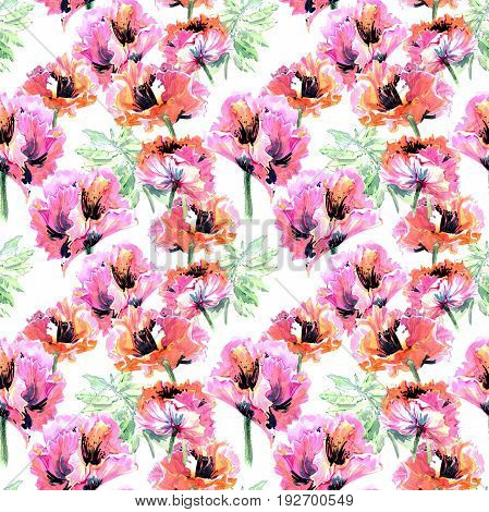 Wildflower poppy flower pattern in a watercolor style isolated. Full name of the plant: poppy, papaver,  opium. Aquarelle wild flower for background, texture, wrapper pattern, frame or border.