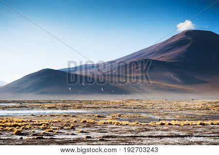 Mountains On The Plateau Altiplano, Bolivia
