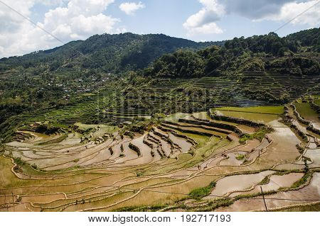 Maligcong rice terraces of the municipality in Mountain Province Philippines
