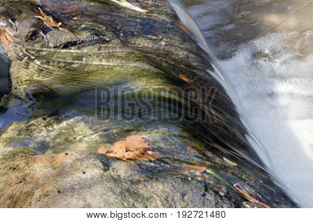 Water roll with water foam and dry leaves