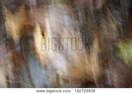 Blurred abstract water background. Dry Leaf under water
