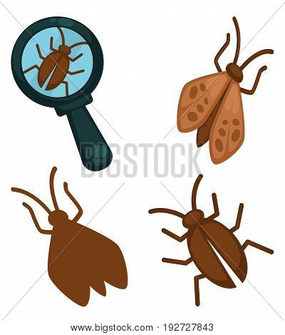 Big moth insects collection and small one under magnifying glass isolated on white. Vector colorful poster in flat design of little pests with wings in brown color that harm human things and clothes.