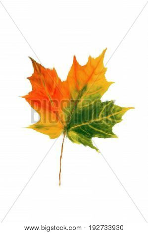 Naive painting, autumn maple leaf, maple leaf yellow and red.