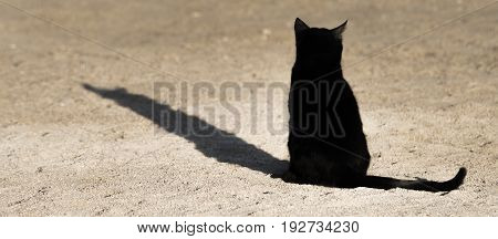 A black cat basks in the last rays of the evening sun on the beach of Eilat. Israel.