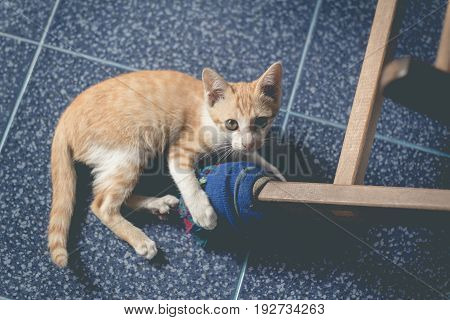 Cute yellow cat in the lazy time(vintage color)