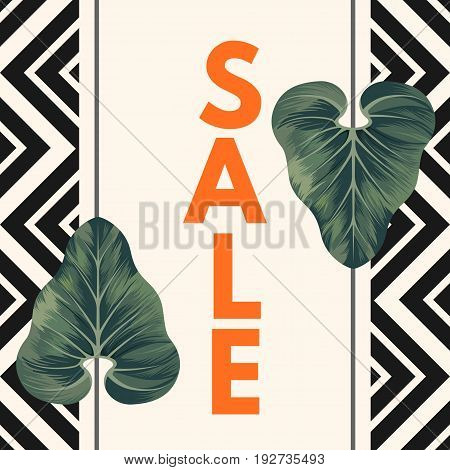 Sale inscription on beige wide vertical line with geometric frame on sides and two dark green Alocasia Zulu Mask leaves on it vector card