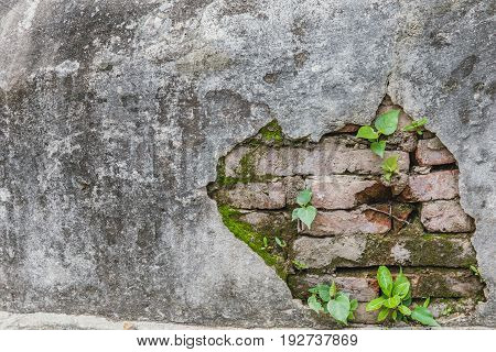Old Grunge Concrete Brick Wall Broken With Plant Glow