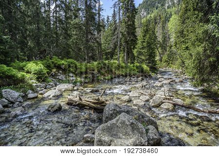 Fast mountain river with crystal clear water in the summer.