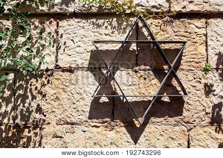 Star of David on the stone wall background and plant