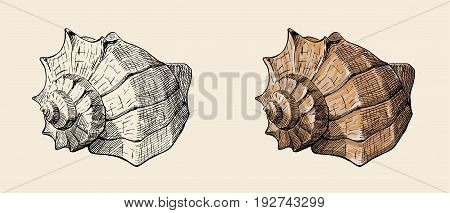 hand drawn vintage ink sketch of conch shell together with colorfully painted variant