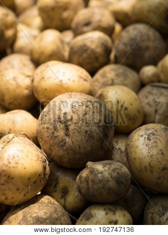 Fresh harvested potatoes in light and shadow, with still soil on them. Shallow depth of field.