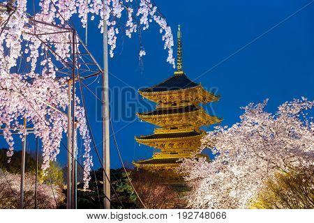 Kyoto Japan at Toji Pagoda with cherry blossomin ligh up in night. Spring season at Kyoto Japan.