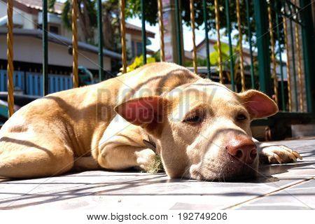 thai dog sleeping with mood light shadow sun rays beaming over