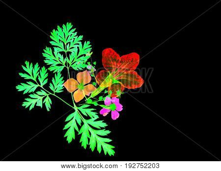 Exotic bright colored abstract flower design on black