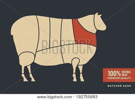 Cuts of lamb. Poster for butcher shop, farmer market. Vector illustration.