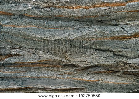 Wood Texture. Bark of tree. Old natural wooden shabby background .