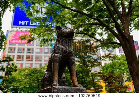 TOKYO JAPAN - MAY 7 2017: Statue of Hachiko an Akita dog which is famous on the loyalty to his owner until the death near Shibuya Station.