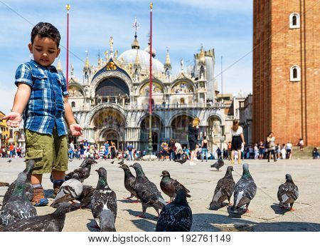 Venice, Italy - May 19, 2017: The boy feeds the pigeons in the Piazza San Marco (St. Mark's Square). Basilica di San Marco in the background. This is the main square of Venice.