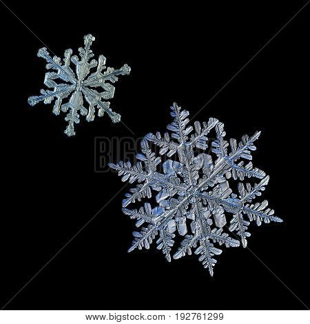Two snowflakes isolated on black background. Macro photo of real snow crystals: large stellar dendrites with complex, elegant shape, glossy relief surface, elegant arms and fine hexagonal symmetry.