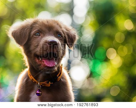 Happy Cute Puppy With Bokeh Background
