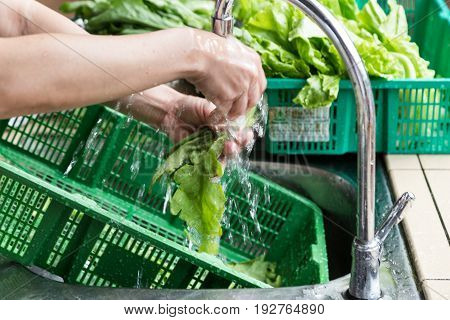Hand Washing Leafy Vegetable With Running Water In Household Sink