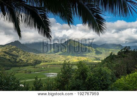 Panoramic view of the taro fields in the Hanalei valley from Princeville overlook in Kauai in Hawaiian islands in high resolution
