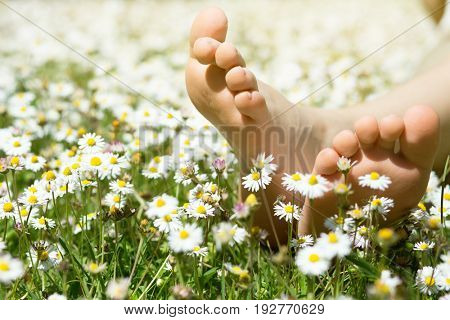 Child's feet in daisy closeup view. Shoeless boy. Little boy lying on summer meadow green grass with daisy.