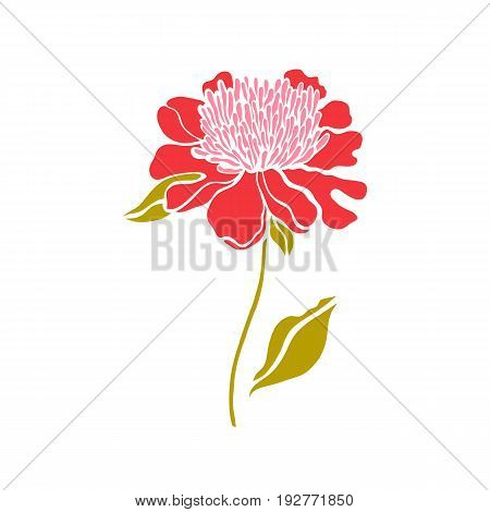 Paeonia. Peony. One flower. Bud. Vector illustration.