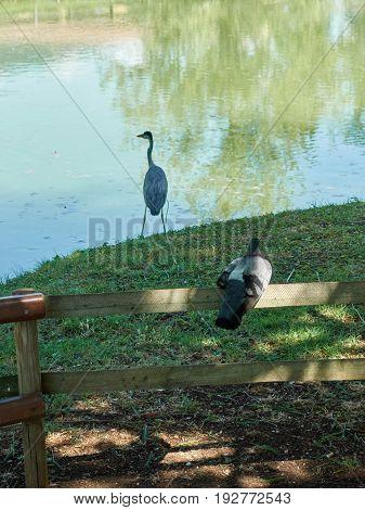 heron alone in the park in summer season