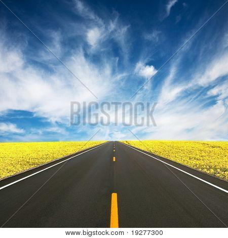 Road between yellow rapeseed field