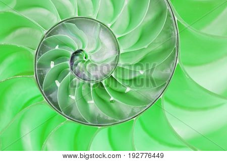 Detailed photo of a halved green backlit  shell of a chambered nautilus (Nautilus pompilius)