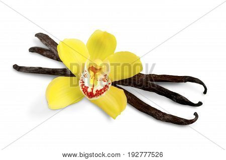 Flower beans vanilla orchid white close-up isolated