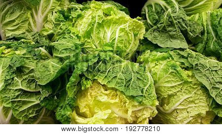 Group of fresh and raw Napa Cabbage